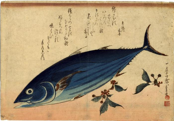 Bonito (<i>katsuo</i>) and saxifrage (<i>yukinoshita</i> [雪の下]) from an untitled series known as <i>The Large Fish</i> [魚尽くし]