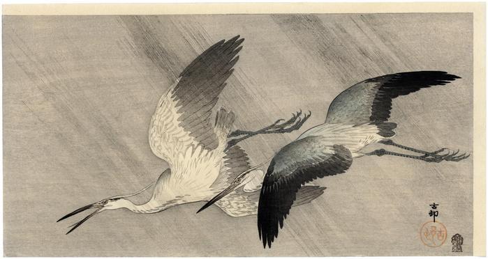 Two little egrets flying in heavy rain