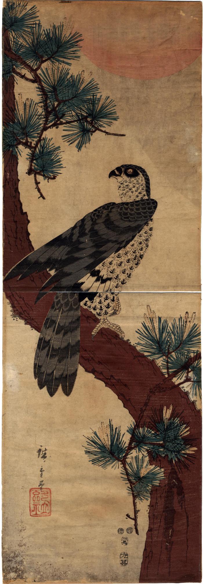 Falcon on Pine at Sunrise (松に鷹日の出)